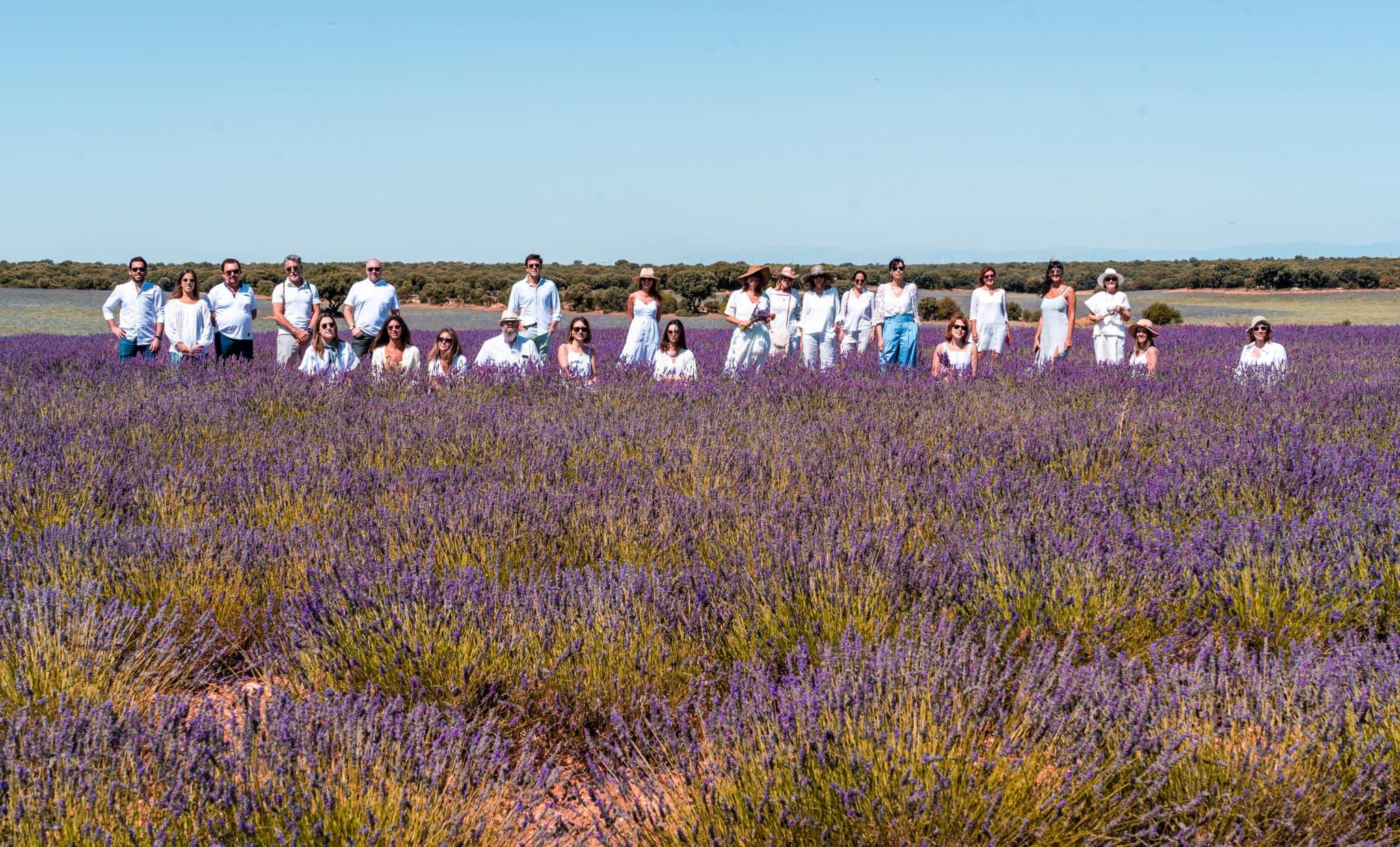 Visita a los campos de lavanda de Brihuega