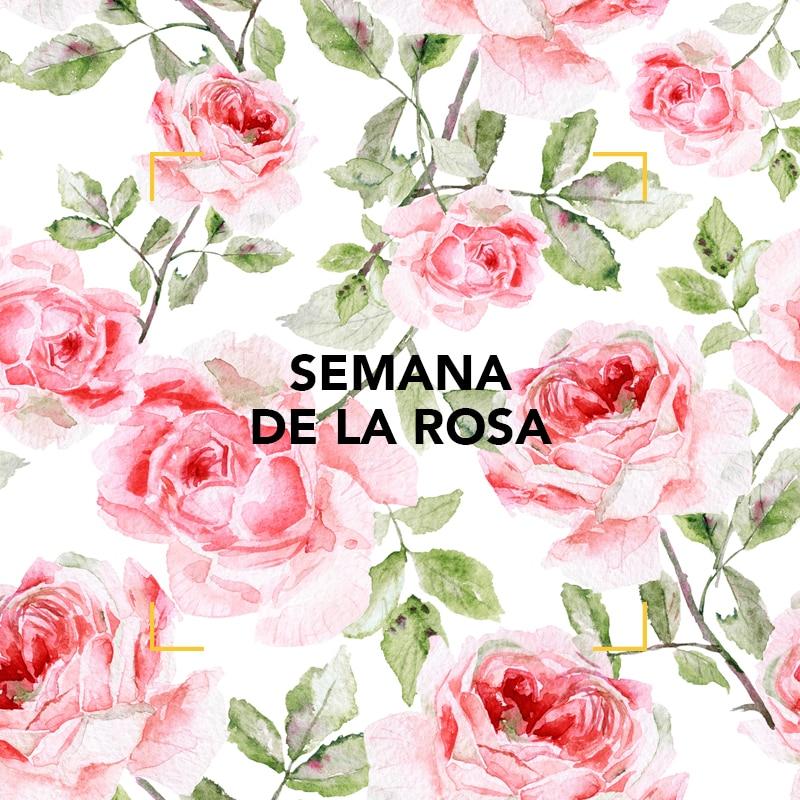 La rosa en perfumería