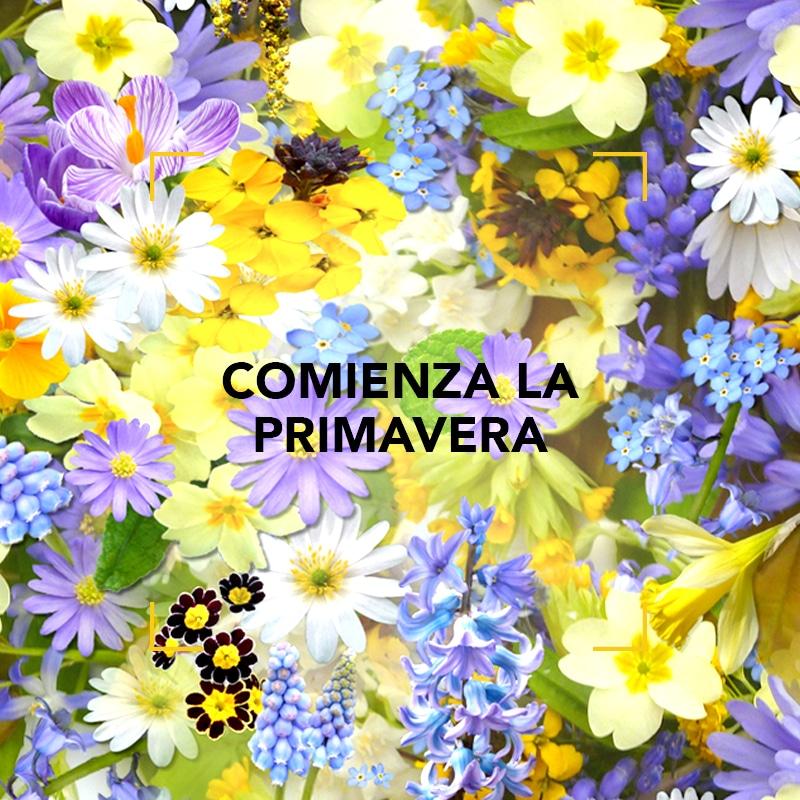 Comienza la Primavera: Semana Mundial de las Fragancias