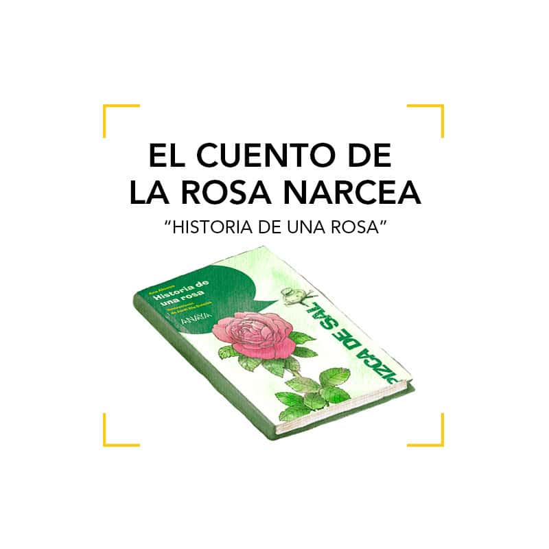 El cuento de la Rosa Narcea