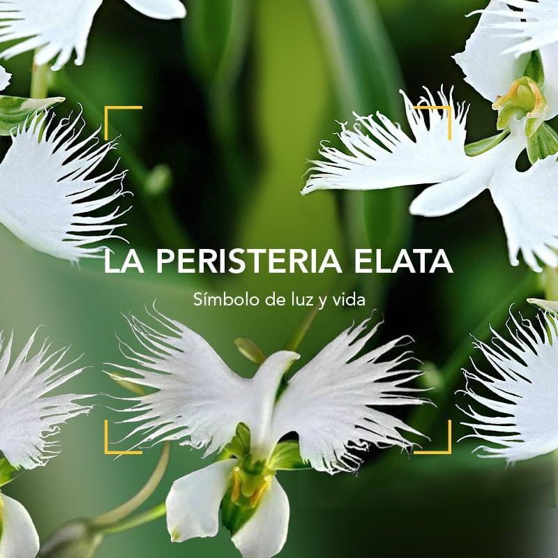 La Peristeria Elata: símbolo de luz y vida