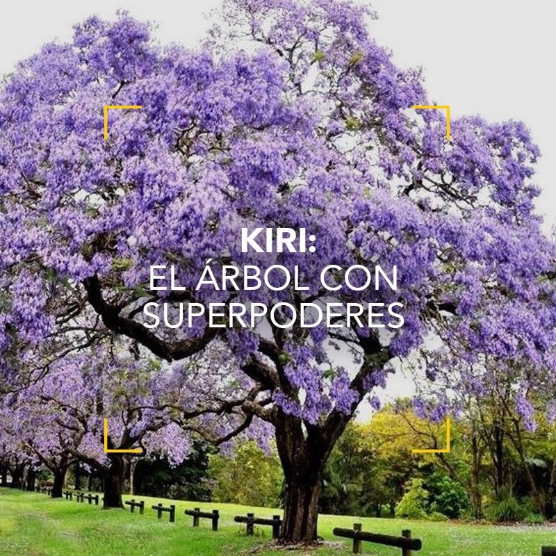Kiri: un excelente aliado del medioambiente