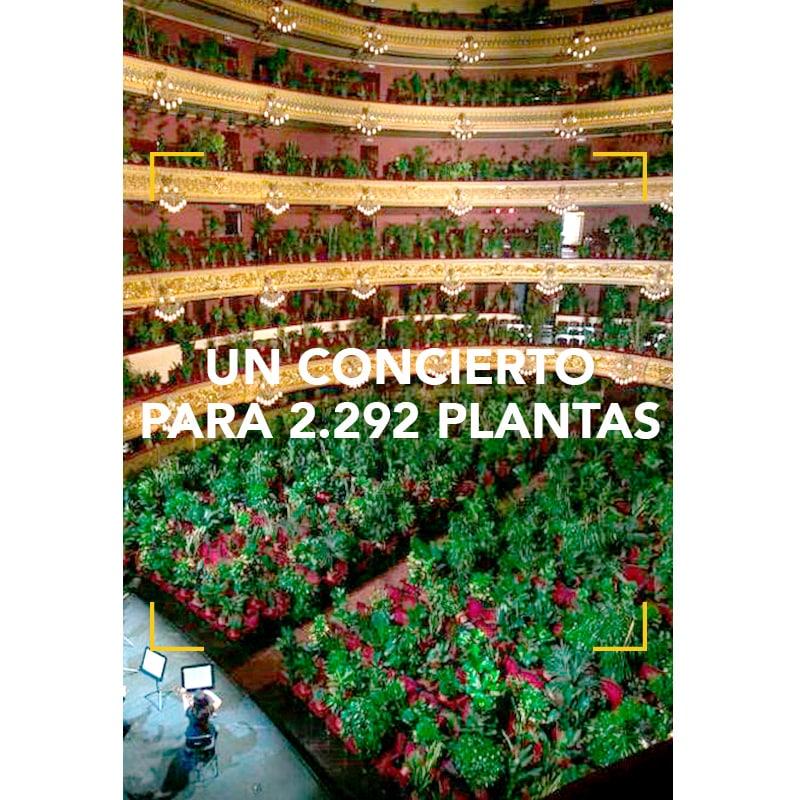 Un concierto para 2.292 plantas