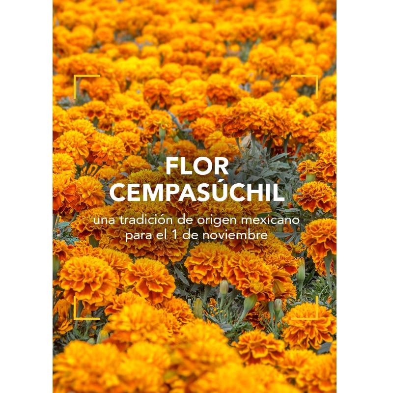 La flor Cempasúchil: una tradición de origen mexicano