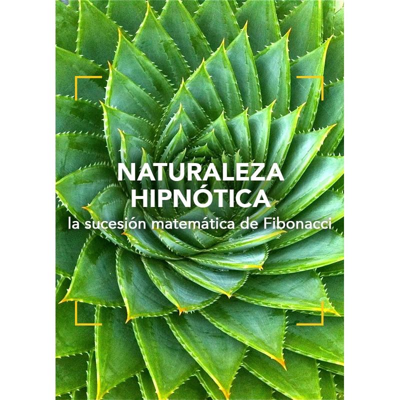 Naturaleza hipnótica: la sucesión matemática de Fibonacci