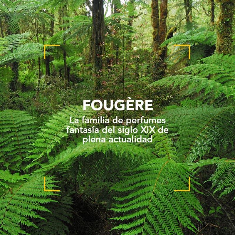 Fougère familia de perfumes de fantasía del Siglo XIX