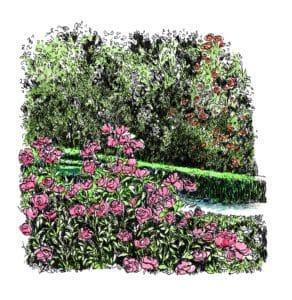 Proyecto de restauración de la rosaleda del Real Jardín Botánico