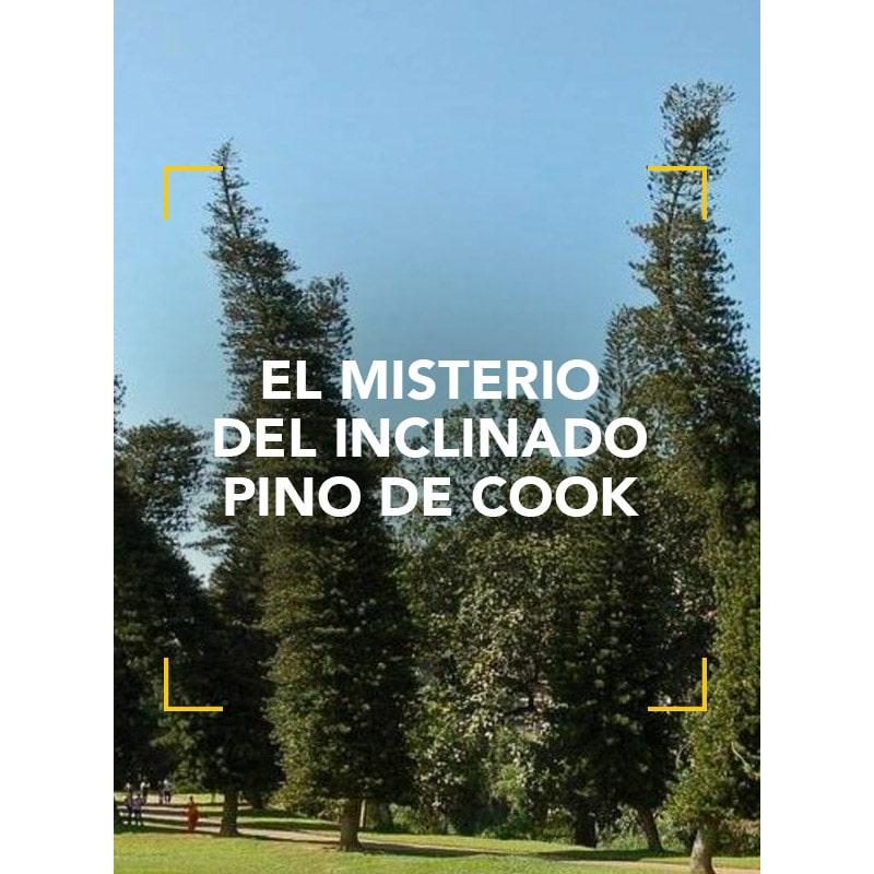 El misterio del inclinado Pino de Cook