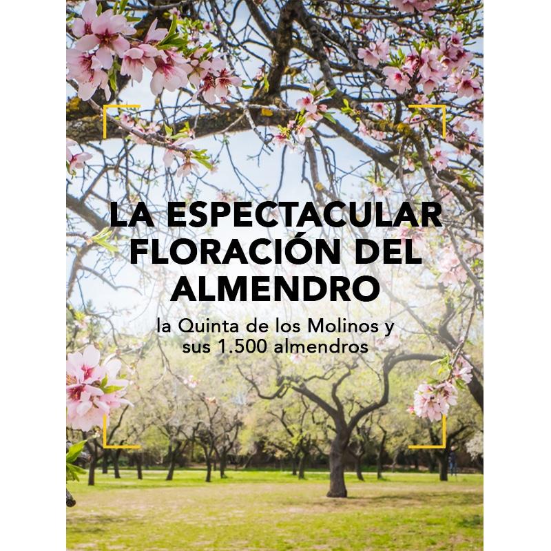 La espectacular floración del almendro