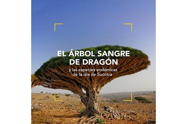 El árbol Sangre de Dragón