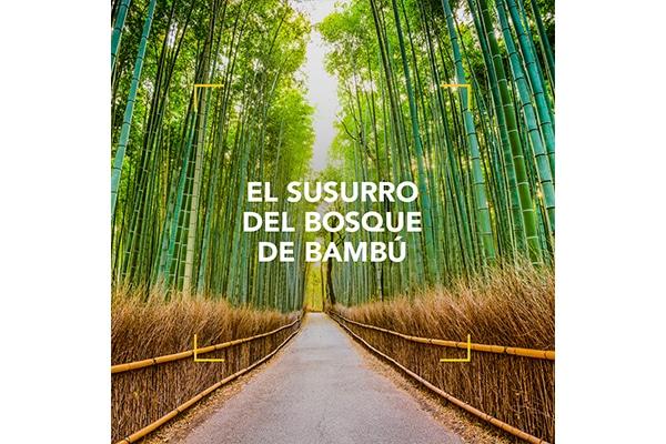 El susurro del bosque de bambú